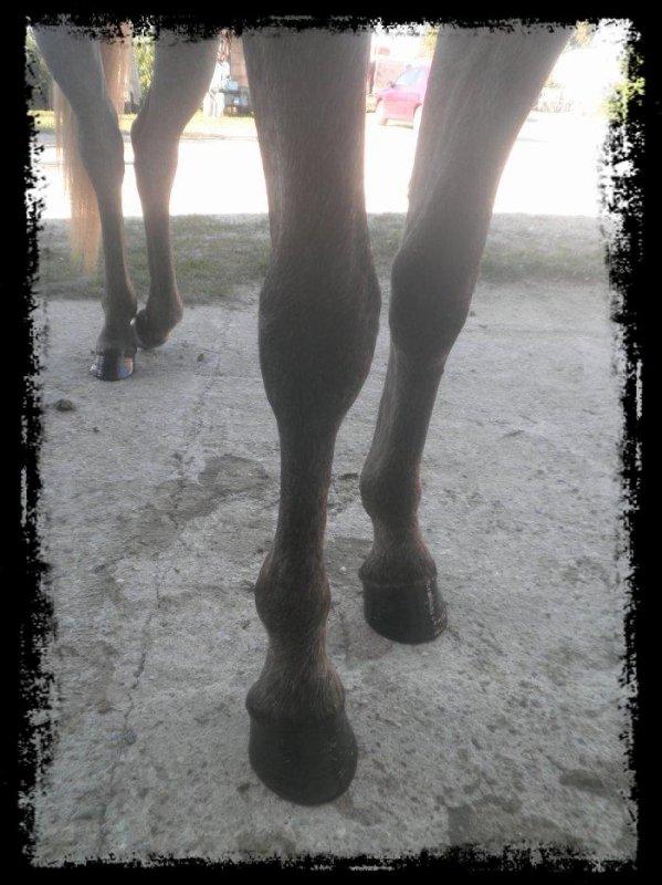 De nouveaux pieds !!