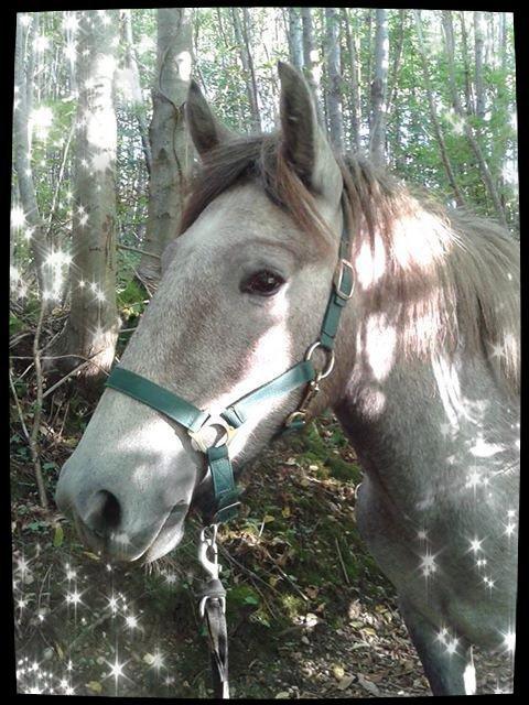 mon bébé poney