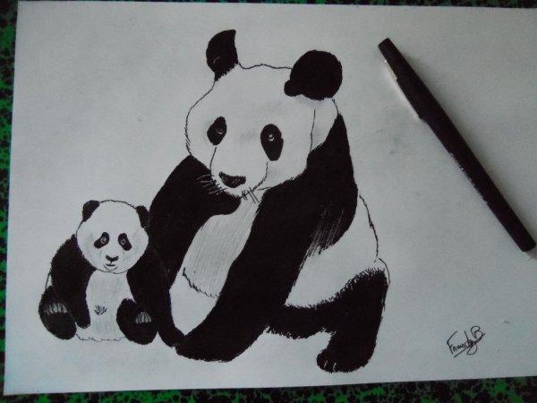 Nos amis les pandas