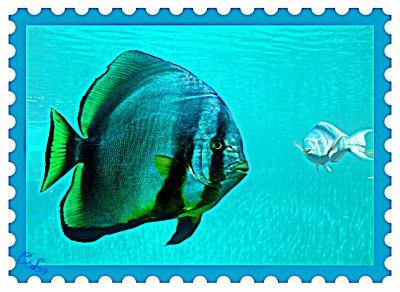 Kélonia : ile de la Réunion