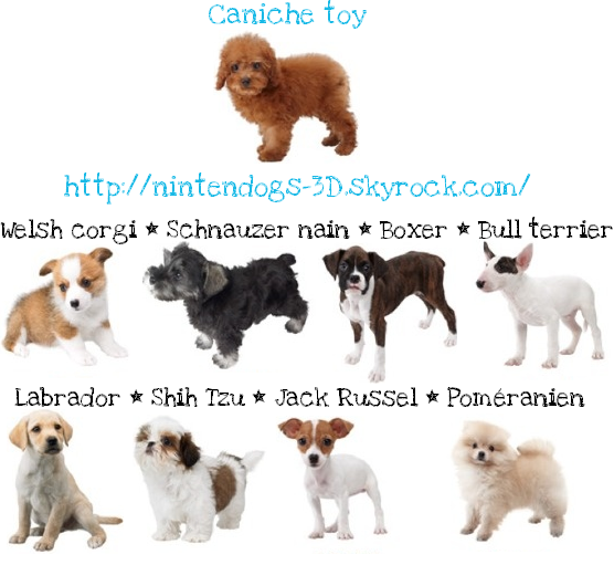 Nintendogs Cats Blog