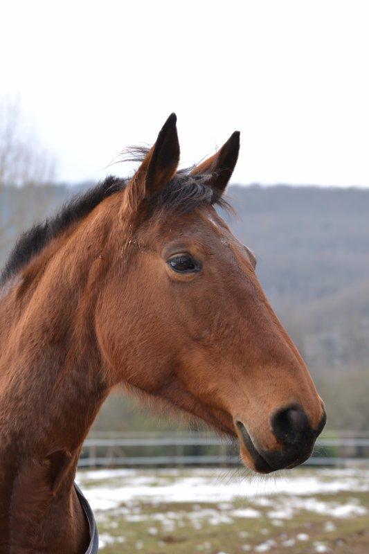 _ Like a war horse . My warlike .  _