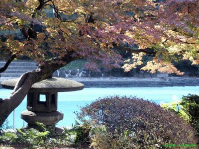 Japon pays de reve
