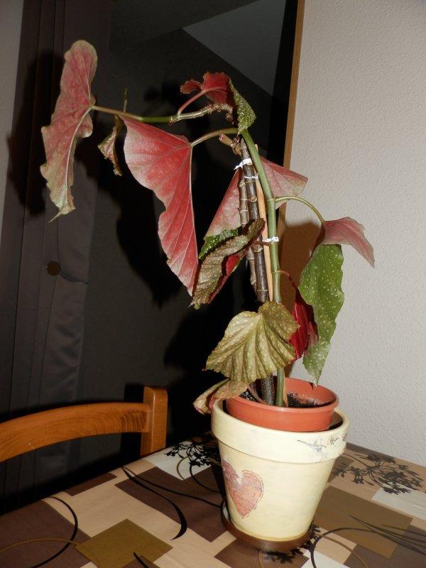 ♥ Ƹ̵̡Ӝ̵̨̄Ʒ ● plante malade ♥ Ƹ̵̡Ӝ̵̨̄Ʒ