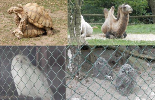 ♥ Ƹ̵̡Ӝ̵̨̄Ʒ ● au zoo ♥ Ƹ̵̡Ӝ̵̨̄Ʒ