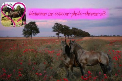 http://concour-photo-chevaux-x3.skyrock.com/