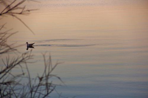 """""""Souviens-toi qu'un poisson mort peut flotter en suivant le courant, mais seul un poisson vivant peut nager en le remontant."""""""