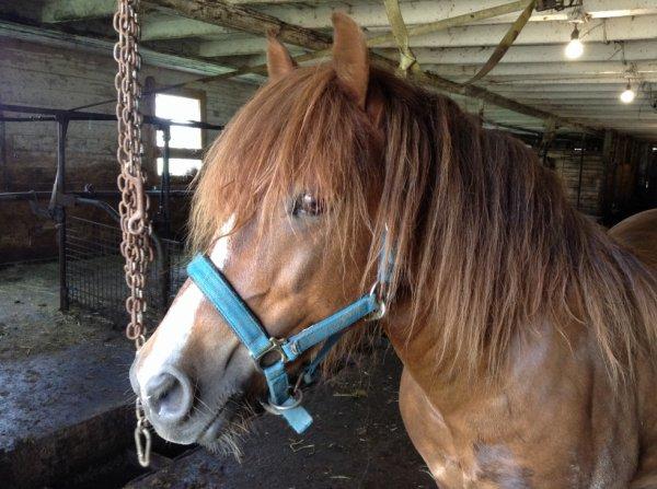 Je vais monter à cheval avec ma meilleur amie :D