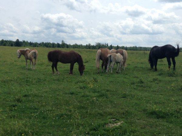 Les chevaux ont changé d'enclos