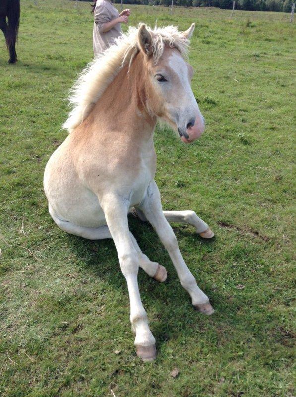 Se que j'aimerai apprendre à Comète et aux autres chevaux (quelque photos pris sur le net) #1 ♥ Déjà 3 d'appris ^.^