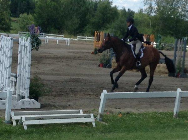 Compétitions à cheval#7