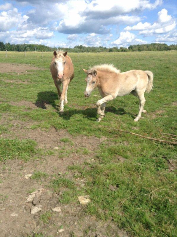 Les chevaux aujourd'hui !! Progrès! ❤