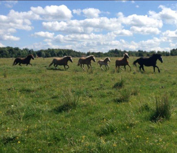 Les chevaux au trot et au galop #2