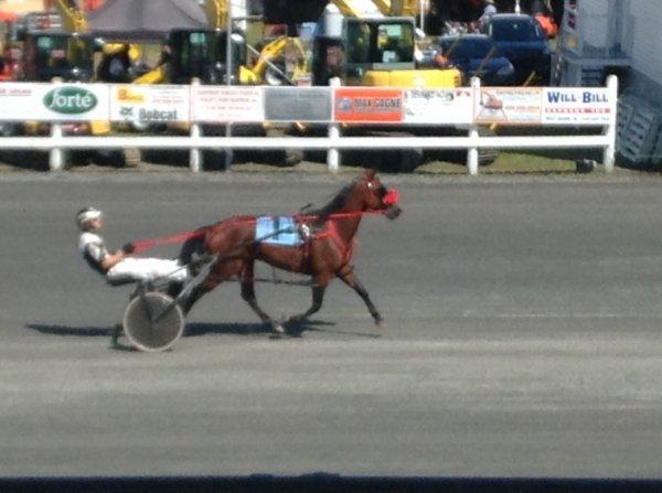 Courses de chevaux #1