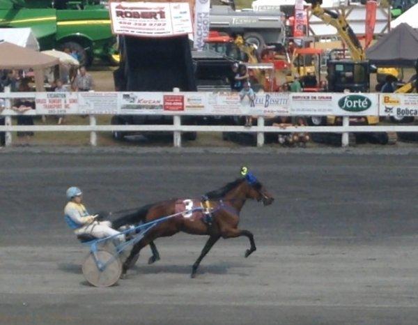 Courses de chevaux #3