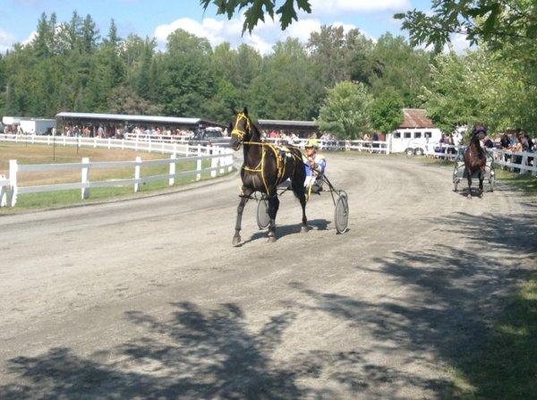 Courses de chevaux #4