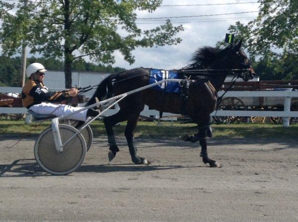 Courses de chevaux #5