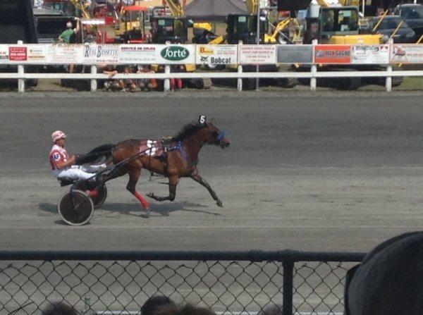 Courses de chevaux #8