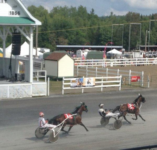 Courses de chevaux #9