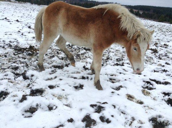 Suite des photos des chevaux ^.^