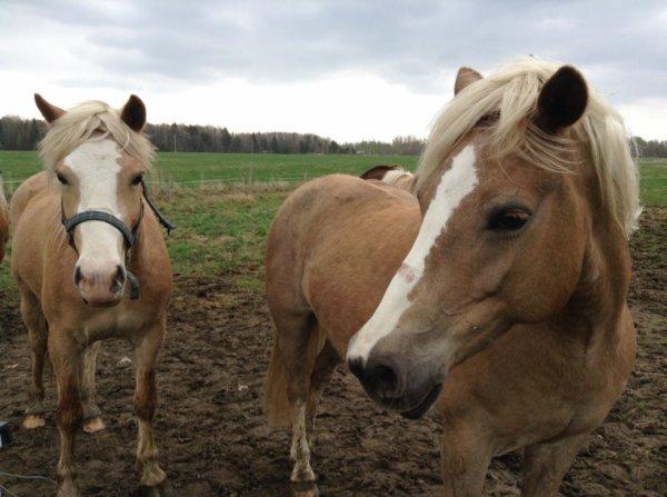 Suite chevaux dehors sauf Misty et son poulain #2 (fin)
