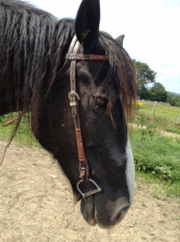 Équitation -> Comtesse / Misty
