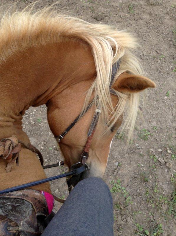 Belle journée avec les chevaux ❤️ Séance avec Comtesse ❤️