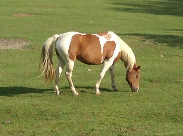 Journée avec des chevaux ( Partit 3 ( Le matin )