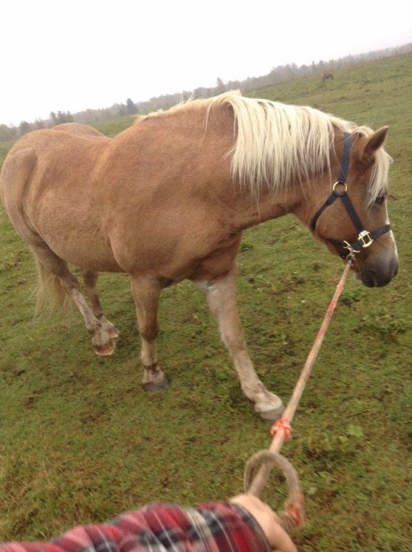 Catin... Cheval difficile selon des entraineurs de chevaux!