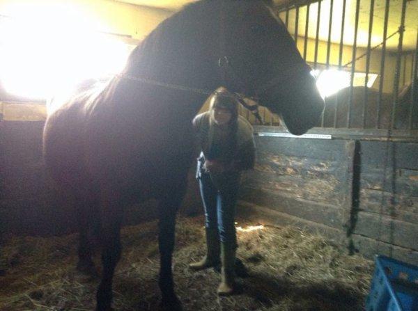 Petit moment avec des chevaux... + 2 dernières photos de Comète!
