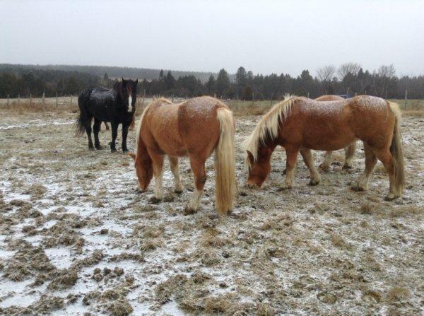 Photos des chevaux -> suite