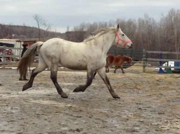 Quelques photos des chevaux du centre