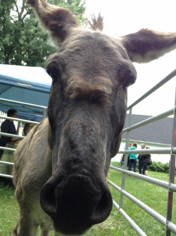 Je ne changera jamais d'idée! Je veux un âne ou deux dans ma vie! Pour dans quelques années encore...