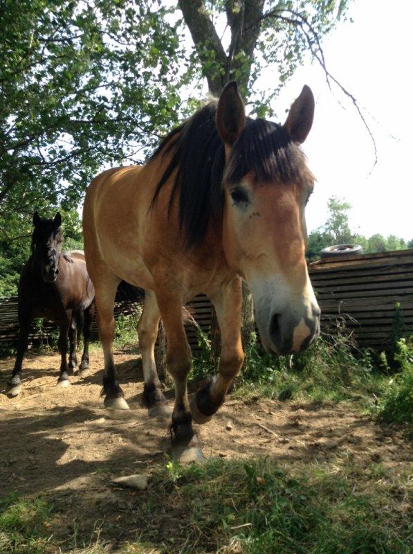 Suite des chevaux du vieux monsieur