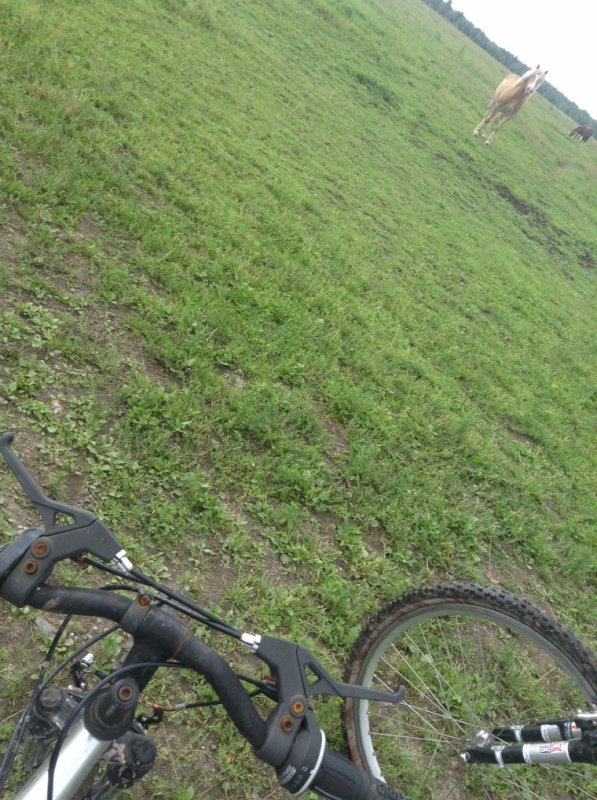 Petit tour de vélo avec mon ami dans le champs des chevaux