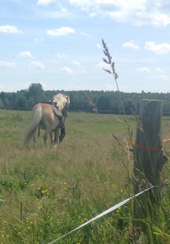 Quelques photos! Bonne journée! Je vais voir les chevaux aujourd'hui Yess!!!
