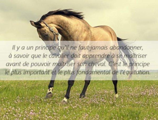 5 citations sur les chevaux ! J'adore !