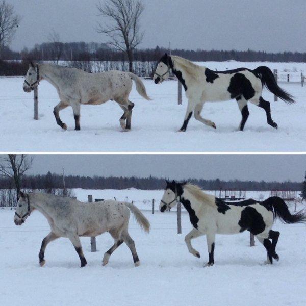Lastcall , Thor & Body (les chevaux du voisin)