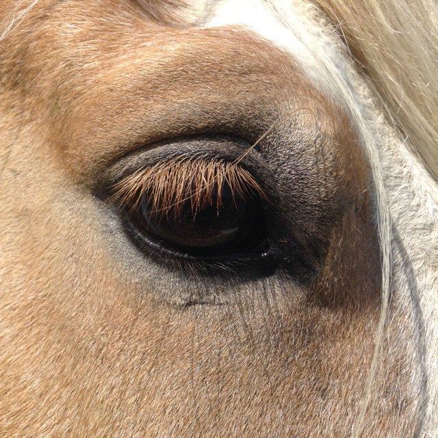 ♥Mon blog sur mes Chevaux♥Aussi, sur les chevaux qui m'entoure♥       ♥J'adore faire de la photographie♥