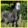 Voici l'avatar de Spartan- 512