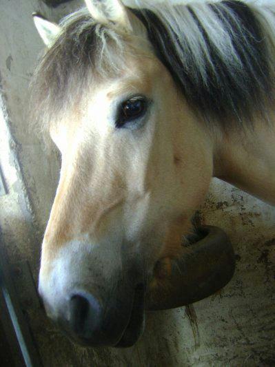 Ma toute premiere séance d'équitation ♥♡