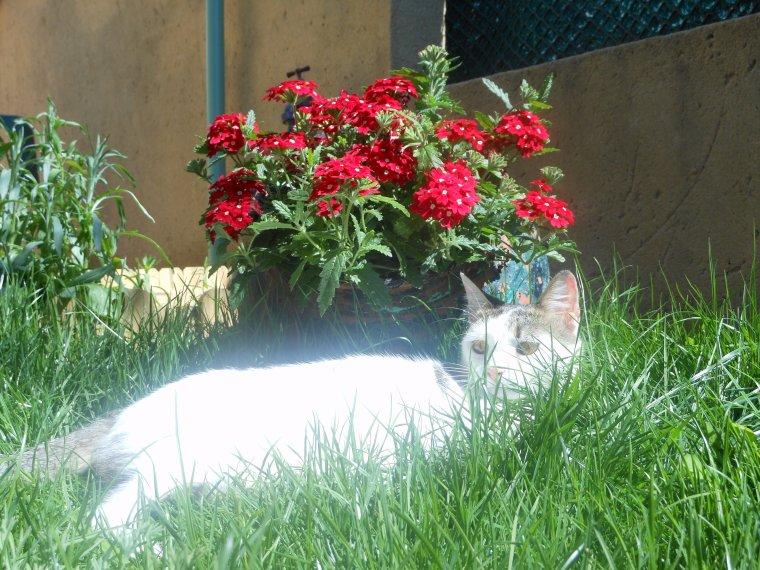 Ma p'tite chatte Nina, j'l'adore cette tite bestiole......