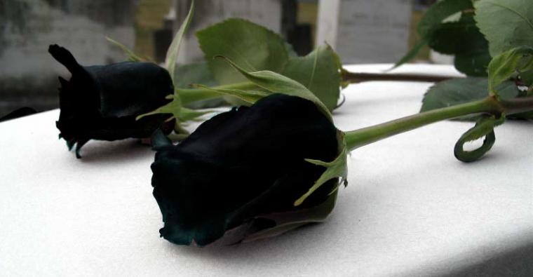 la rose noire de halfeti....pour elle....