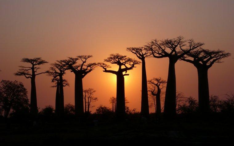 Coucher de soleil n° 6 sur l'allée des baobabs, Madagascar....