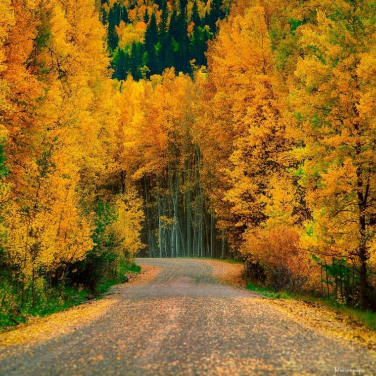 Fin de l'automne.........