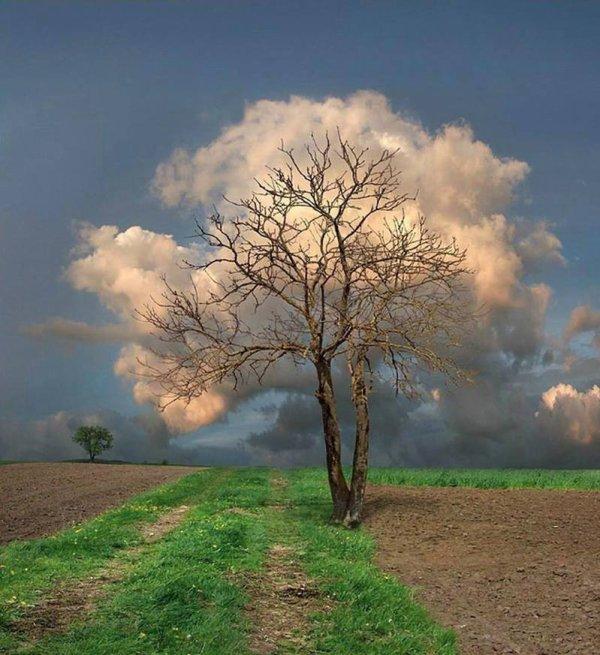 L'arbre à nuage : cette photo est génial.....