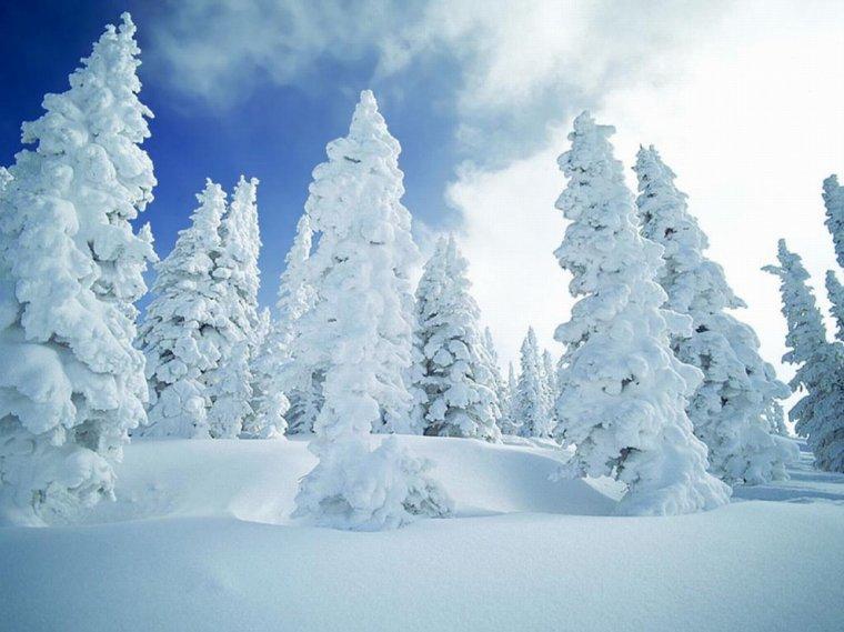Bonjour l'hiver.....