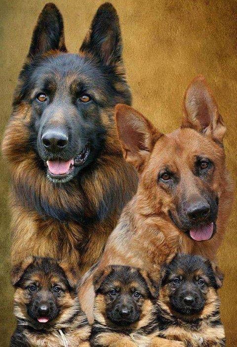 Photo de famille......