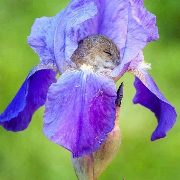 Surprise à dormir dans une fleur......