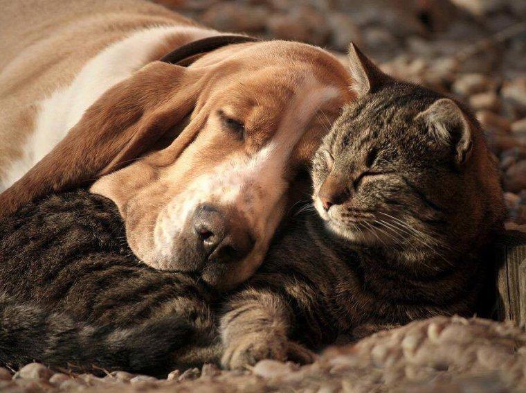 Petite sieste entre amis.....